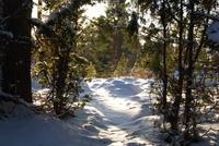 Sunny Snowpath